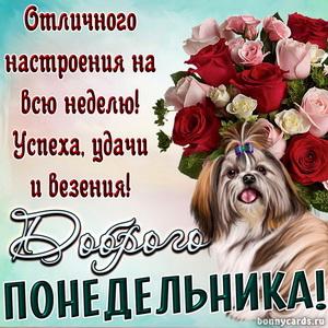 Букет роз и собачка желающая всем доброго понедельника