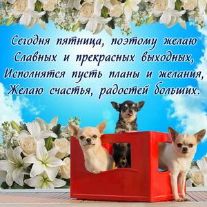 Милые собачки желают прекрасных выходных