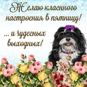 Смешная собачка желает классного настроения