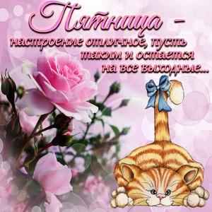 Милая открытка на пятницу с розой и котом