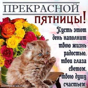 Забавный котенок желает всем прекрасной пятницы