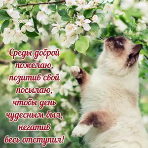 Красивый котик в яблоневом саду