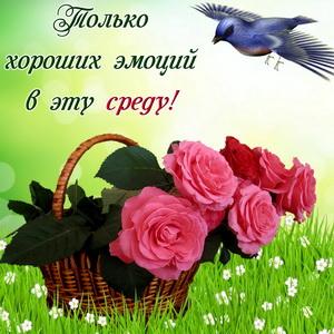 Корзина с розами и пожелание хороших эмоций