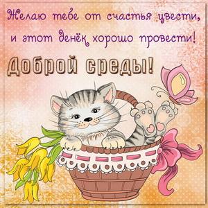Котенок в корзинке с цветами