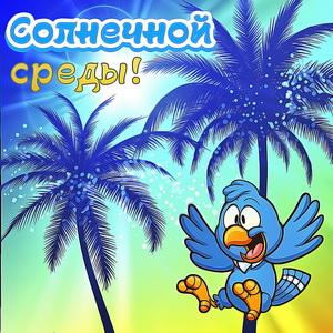 Картинка с пальмами и попугаем