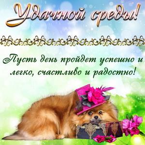 Пожелание удачной среды и милая собачка
