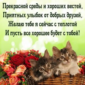 Котята и пожелание прекрасной среды