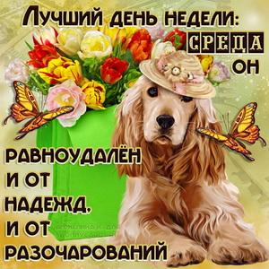 Оригинальная открытка на среду с собачкой в шляпке