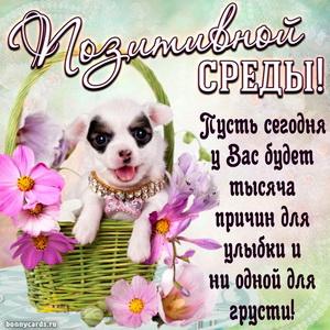 Собачка в корзинке желает всем позитивной среды