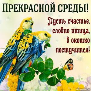 Картинка с попугайчиками и пожеланием прекрасной среды