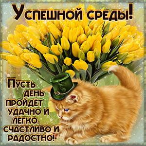 Котик в шляпке среди тюльпанов желает всем успешной среды