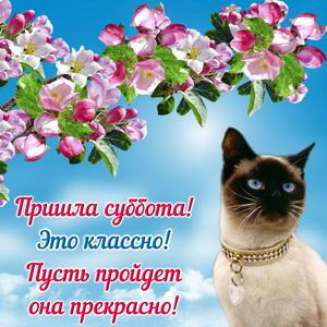 Открытка с котиком и цветущей веткой
