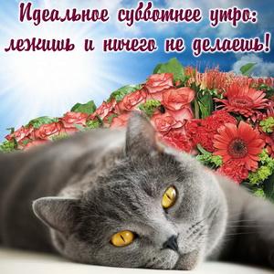 Картинка с котиком на фоне красных цветов