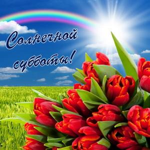 Красные тюльпаны и пожелание солнечной субботы