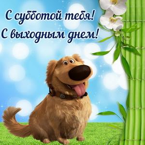 Милая собачка поздравляет тебя с субботой