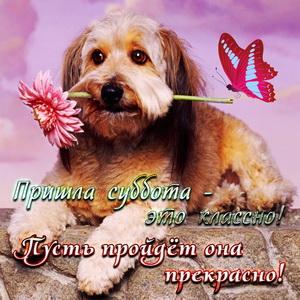 Красивая собачка с цветочком в зубах