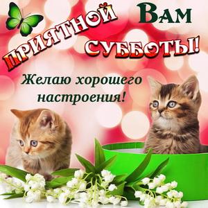 Котята желают Вам приятной субботы
