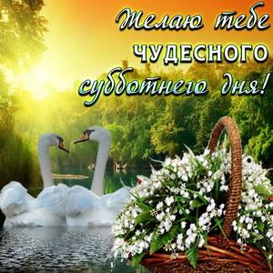 Открытка с лебедями на красивом фоне