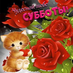 Котёнок на фоне красивых красных роз