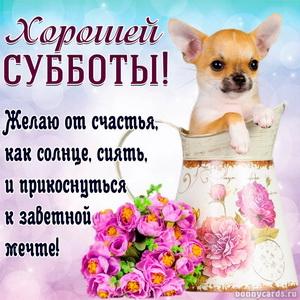 Милая собачка в кувшине желает всем хорошей субботы