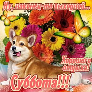 Картинка с собачкой и пожеланием хорошего отдыха