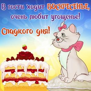 Открытка с забавным котиком и тортом