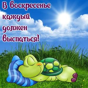 Мультяшная черепашка спящая на траве