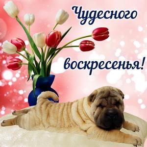 Картинка с букетом тюльпанов и милой собачкой