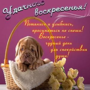 Собачка в корзинке и пожелание на воскресенье