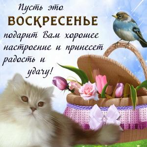 Картинка с котом и пожеланием на воскресенье