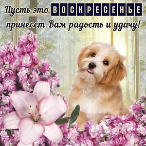 Забавная собачка в окружении цветов