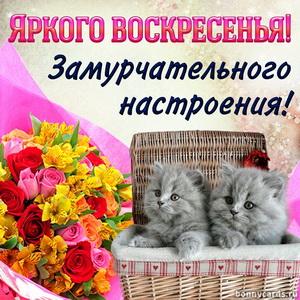 Открытка с котятами желающими яркого воскресенья