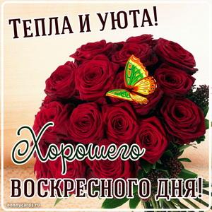 Картинка на воскресенье с огромным букетом алых роз
