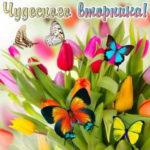 Разноцветные бабочки на тюльпанах
