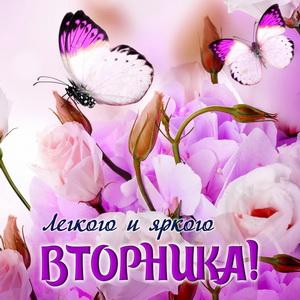 Бабочки над распускающимися цветами