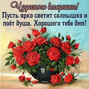 Красивый букет роз для чудесного вторника