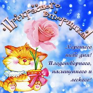 Котик с розой желает прекрасного вторника