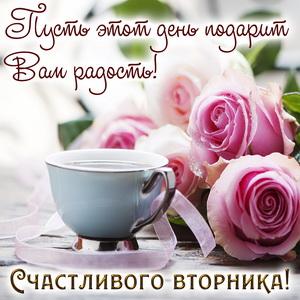 Красивые розы и пожелание счастливого вторника