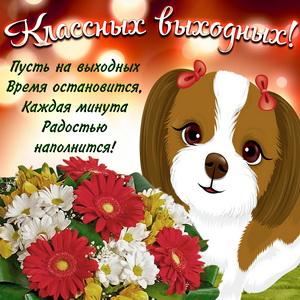 Милая собачка желает классных выходных