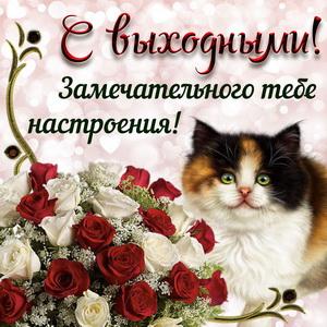Милый котик и букет розочек на выходные