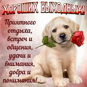 Собачка с розой желает хороших выходных