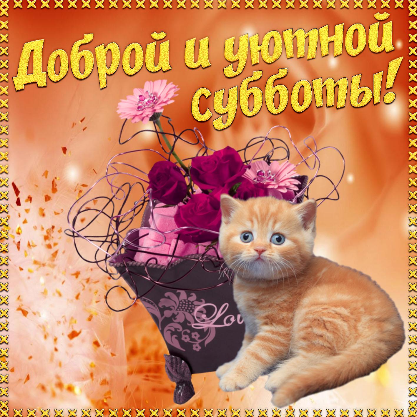 Котик желает доброй и уютной субботы