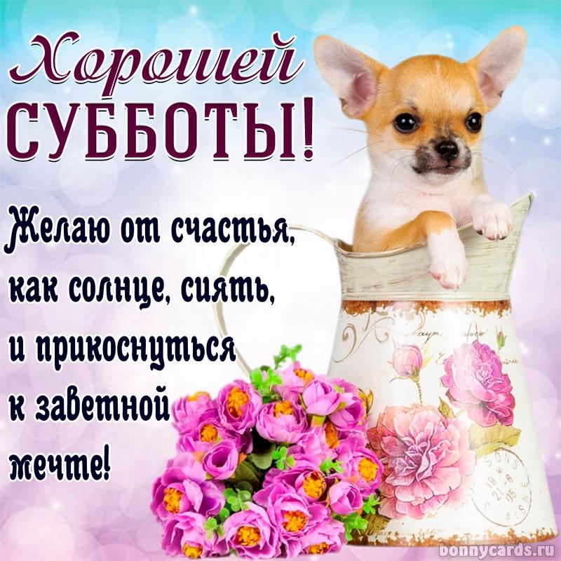 Открытка - милая собачка в кувшине желает всем хорошей субботы