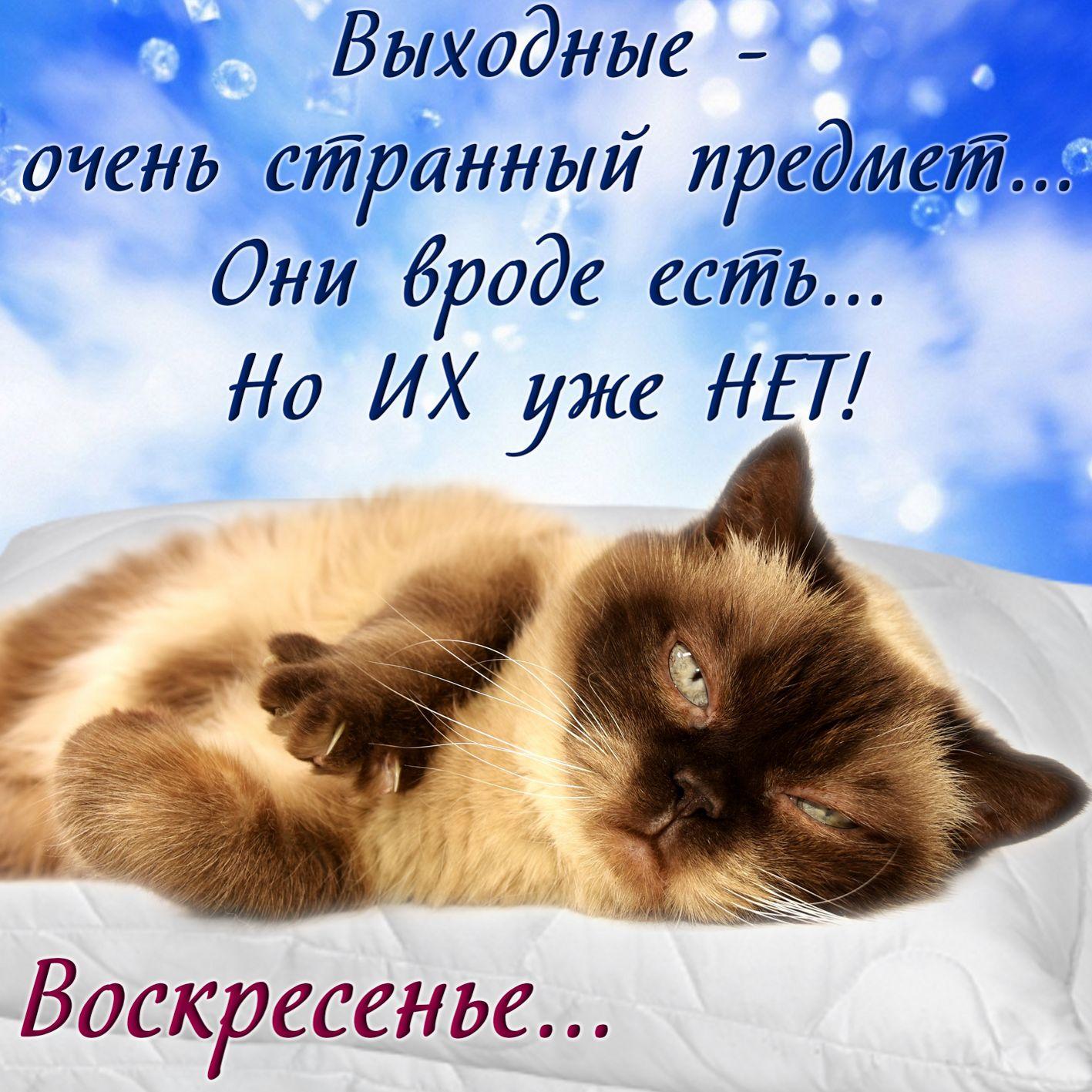Открытка на воскресенье с красивым котиком
