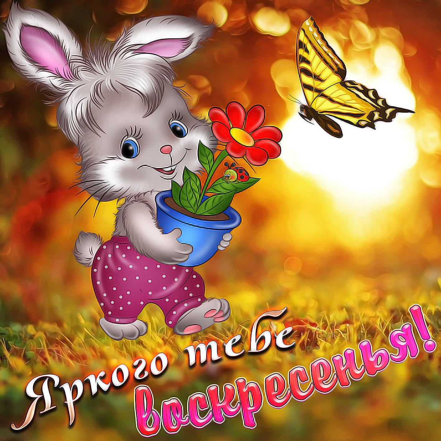 Красивая картинка с кроликом и бабочкой на воскресенье
