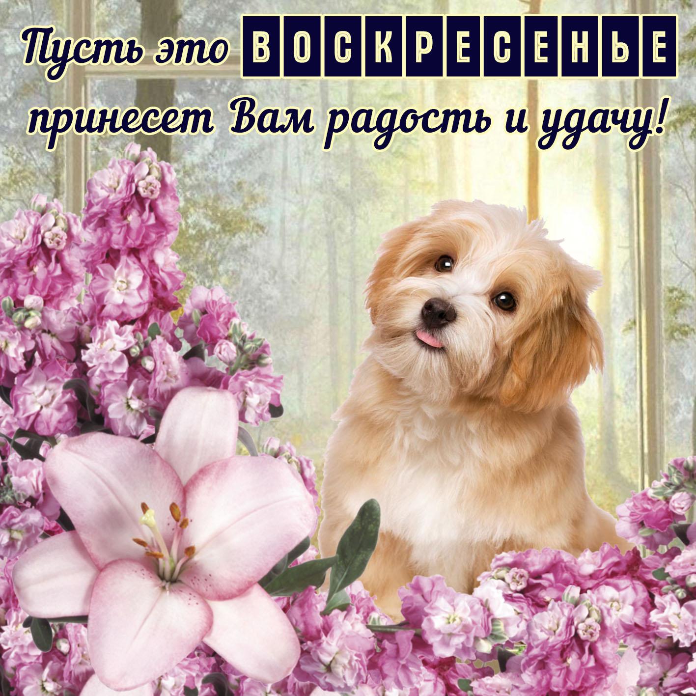 Открытка на воскресенье - забавная собачка в окружении цветов