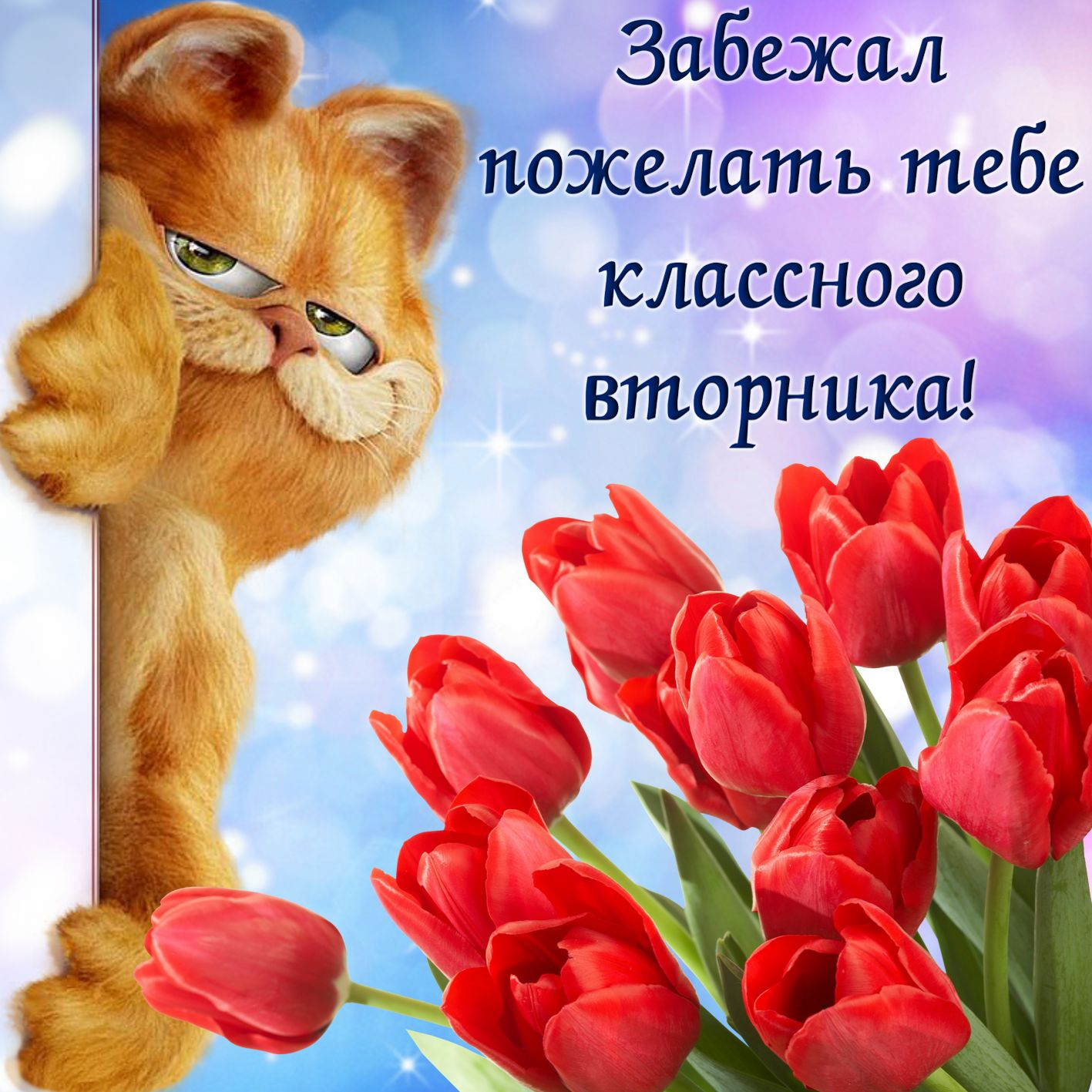 Открытка на вторник - красные тюльпаны и забавный котик