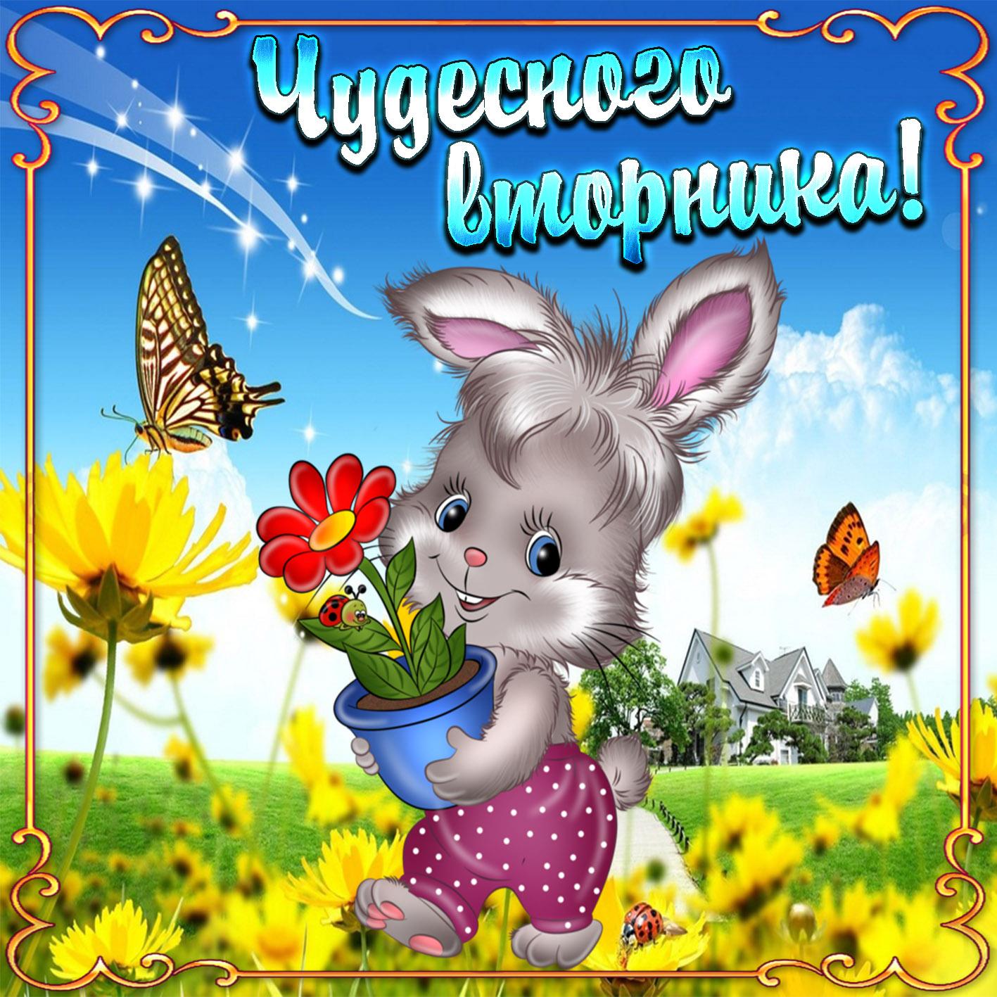 Открытка на вторник - кролик с цветочком в красивой рамке