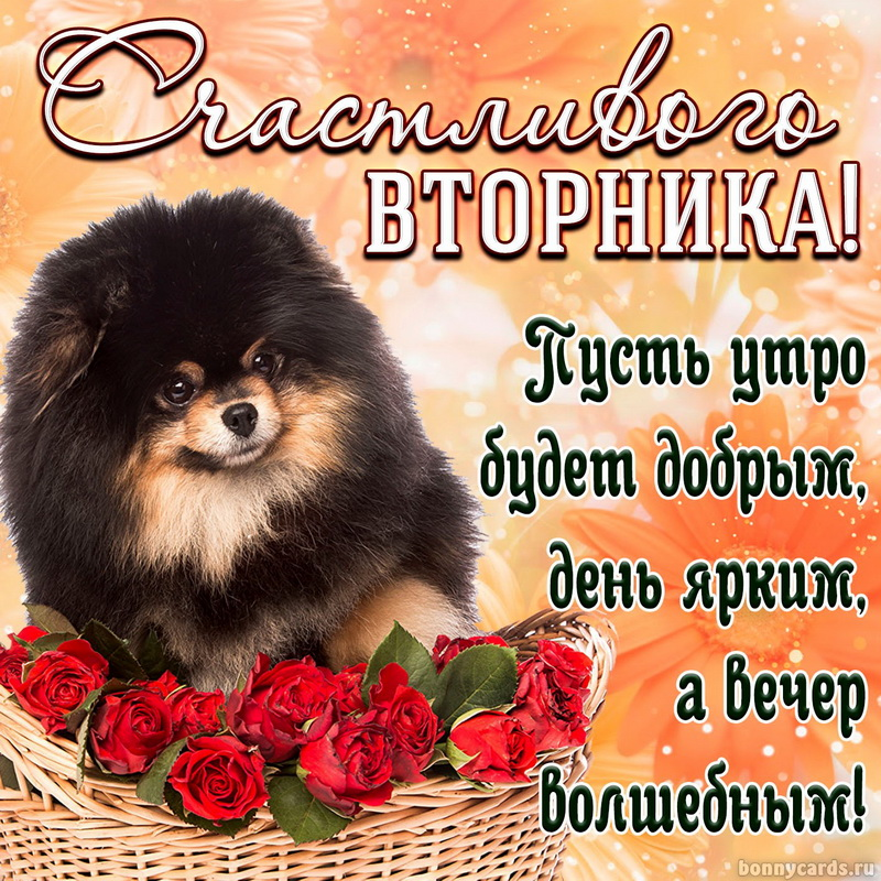 Открытка - милая собачка в корзинке желает всем счастливого вторника