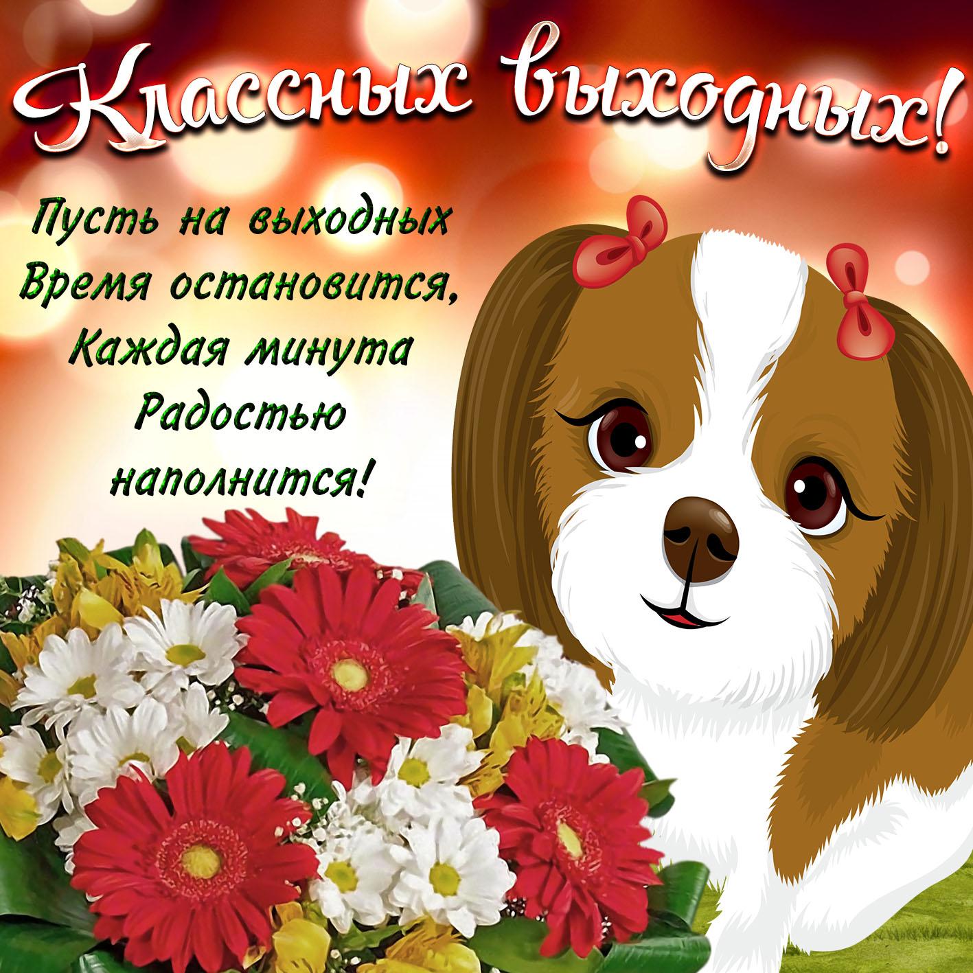 Открытка - милая собачка желает классных выходных